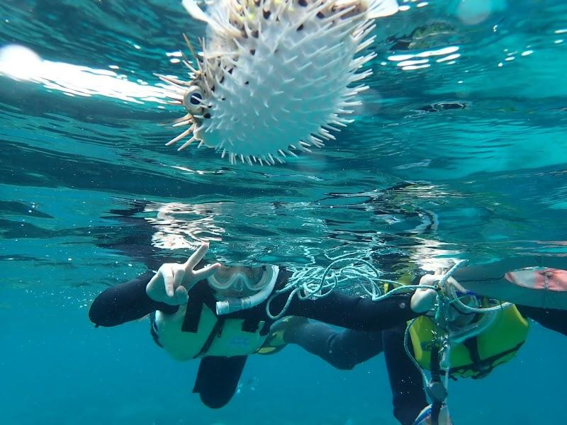美ら海ダイバーズ