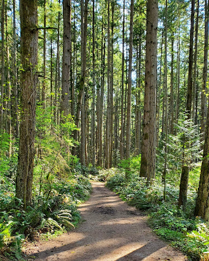 Bridle Trails State Park in Seattle WA