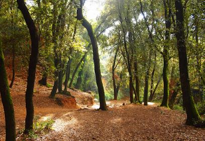Bosc de Malhivern