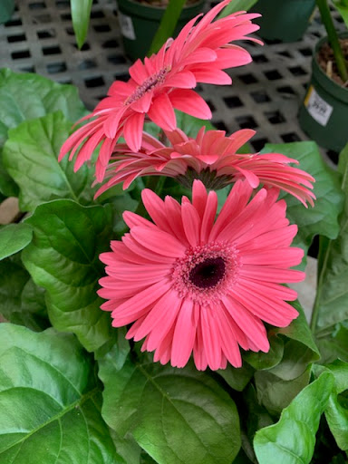 Garden center Comptoir Richelieu Inc Botanix in Sorel-Tracy (QC) | LiveWay