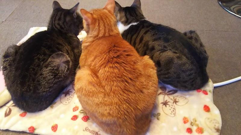 保護猫カフェfunnyCat