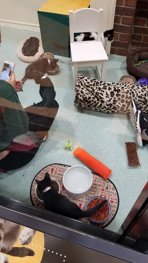 Animal Shelter «Oregon Humane Society», reviews and photos