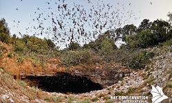 Bracken Cave Preserve (Bat Conservation International Inc)