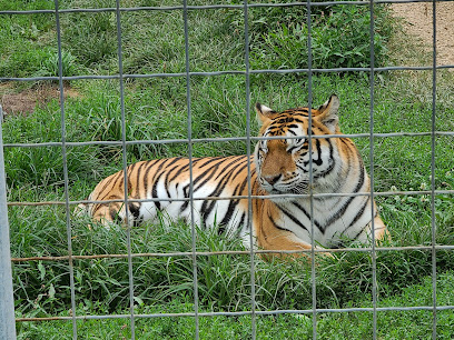 experience-wisdells-things-to-do-wisconsin-big-cat-rescue