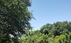 Lady Bird Johnson Municipal Park