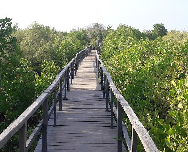 Labuhan Mangrove