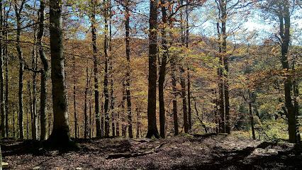 Bosque De Gamueta
