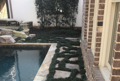 Curb Appeal Landscaping and Lawn care