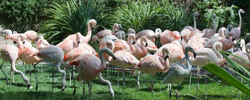 Zoo «Santa Barbara Zoo», reviews and photos, 500 Ninos Dr, Santa Barbara, CA 93103, USA