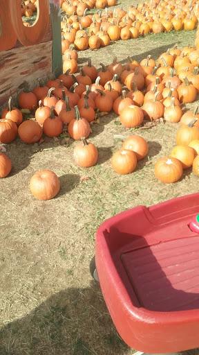 Farm «Sun High Orchards», reviews and photos, 19 Canfield Ave, Randolph, NJ 07869, USA
