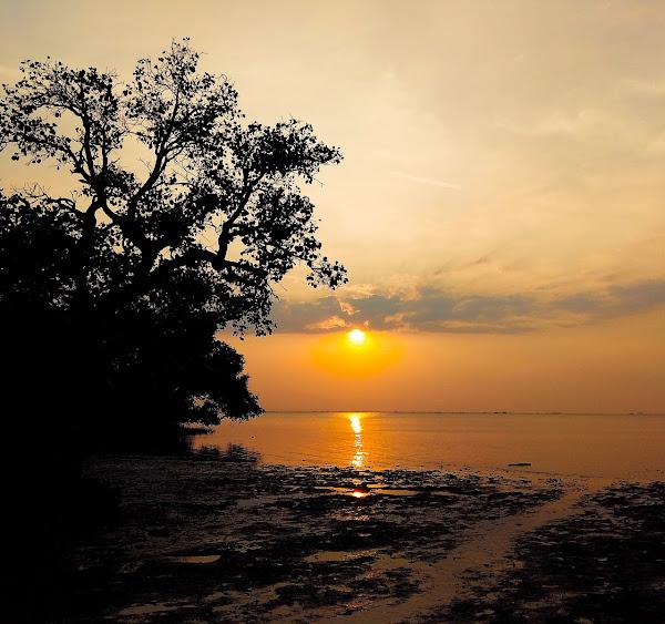 Pantai Tambak Sari