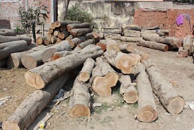 S.N Sharma Saw Mill – Timber in Muzaffarpur Muzaffarpur