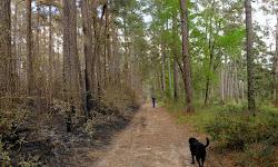 William Goodrich Jones state forest
