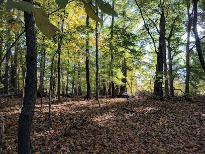 Latimer Woods