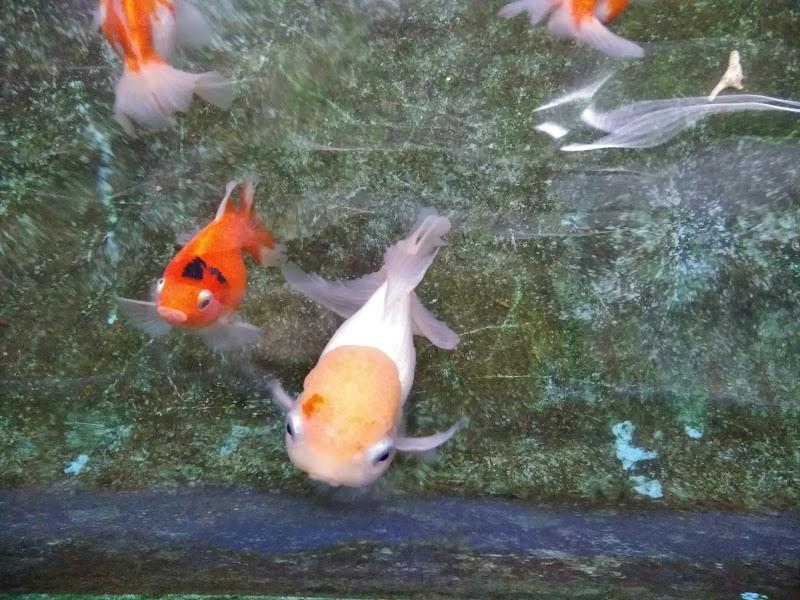 茨木観魚園