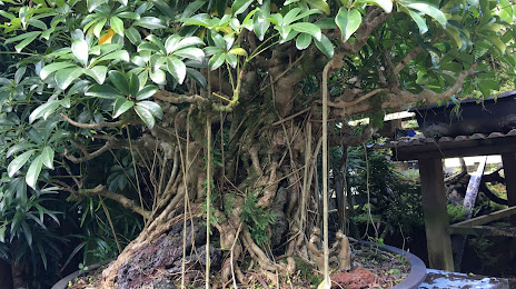 Tree Expert Orchidlands Estates, HI
