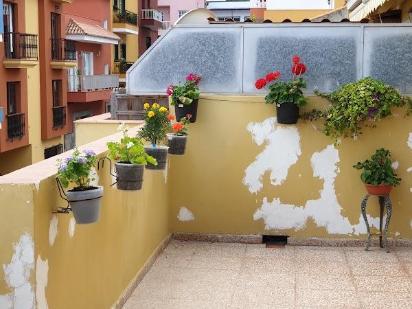 El Draguito Garden Center