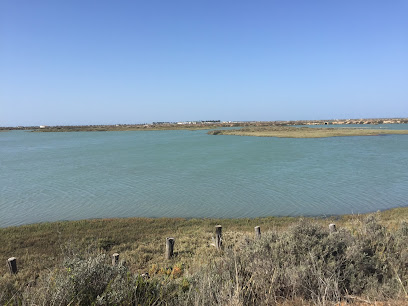 Bay of Cádiz Natural Park