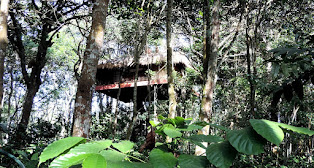 Wayanad Tree House