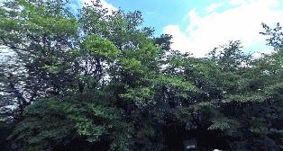 万三郎岳(天城山)