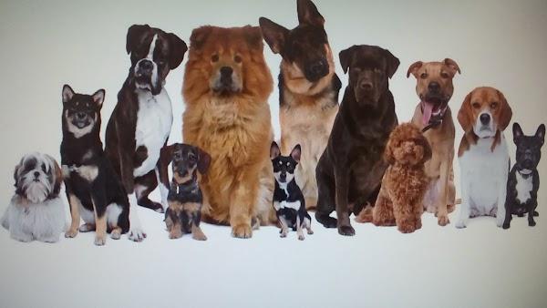 bitxus clínica veterinaria