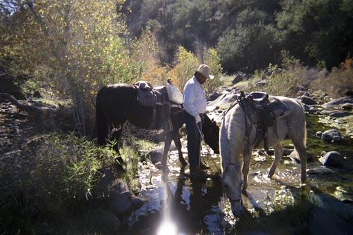 Horseback Riding Service «Spur Cross Stables», reviews and photos, 44029 N Spur Cross Rd, Cave Creek, AZ 85331, USA
