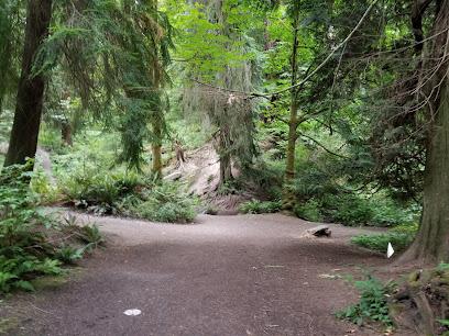 Schmitz Preserve Park in Seattle WA
