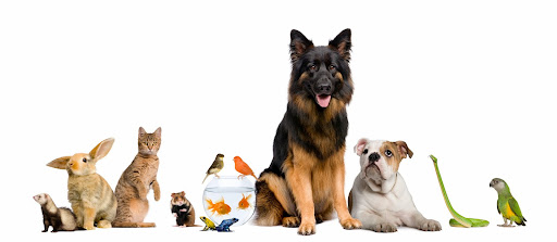 Pet Supply Store «Incredible Pets», reviews and photos, 649 Sutton Way, Grass Valley, CA 95945, USA