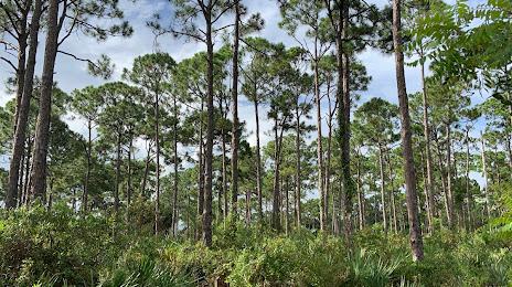Tree Services in Limestone creek, FL