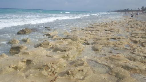 Park «Juno Dunes Natural Area», reviews and photos, 14501 US-1, Juno Beach, FL 33408, USA