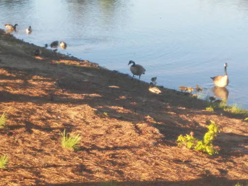Park «Hunter Memorial Park», reviews and photos, 8830 Gurley Rd, Douglasville, GA 30134, USA