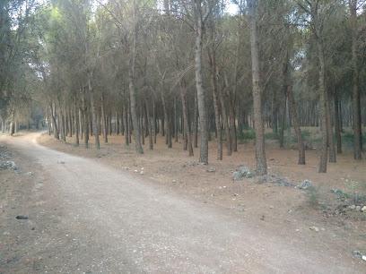 forestal de Valdilecha Park