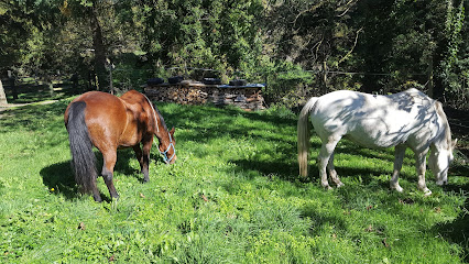 Ferme Equestre Boutonnet Alexandra