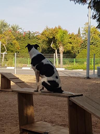 פארק כלבים רביבים