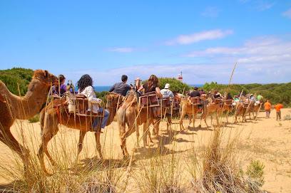 Aires Africanos - Ecoturismo en camello por Doñana