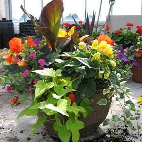Jardinerie Sun Harvest Greenhouses à Glenburnie (ON) | LiveWay