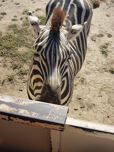 Africa Safari Adventure Park Zoo In Canas Costa Rica Top Rated Online
