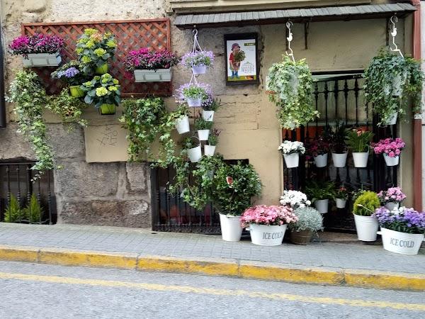 Floristería Agarimo