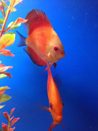 Tropical Fish Store «America Aquaria», reviews and photos, 3485 N 124th St, Brookfield, WI 53005, USA