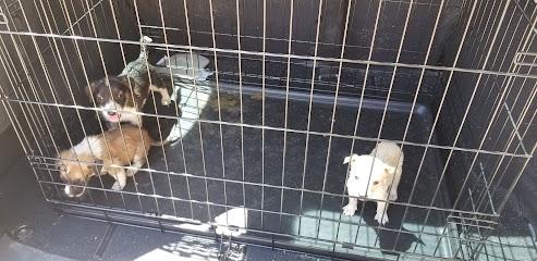 Centro de Atención Canina y Felina