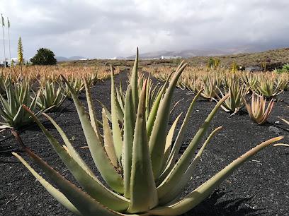Museo de Aloe de Lanzarote