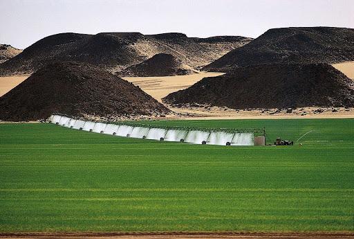 Cultivos en Al-Jawf en el Desierto del Sahara Libia Foto Mashalla Alzwey