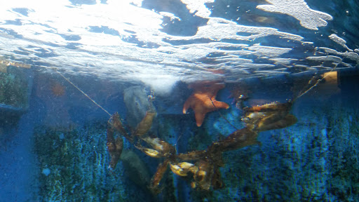 Aquarium «Woods Hole Science Aquarium», reviews and photos, 166 Water St, Woods Hole, MA 02543, USA