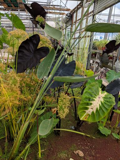 Jardinerie Botanix Les Jardineries LG Chassé à Trois-Rivières (Quebec) | LiveWay