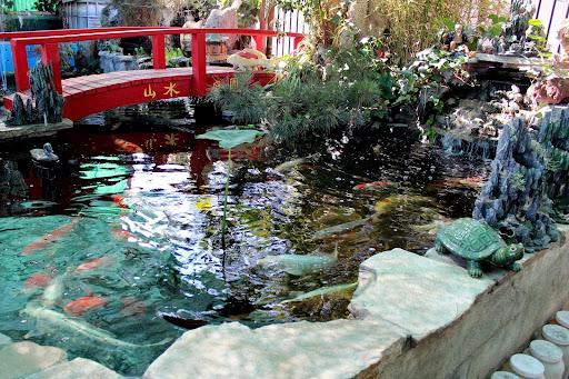 Pet Store «CK Aquarium», reviews and photos, 431 S San Gabriel Blvd, San Gabriel, CA 91776, USA