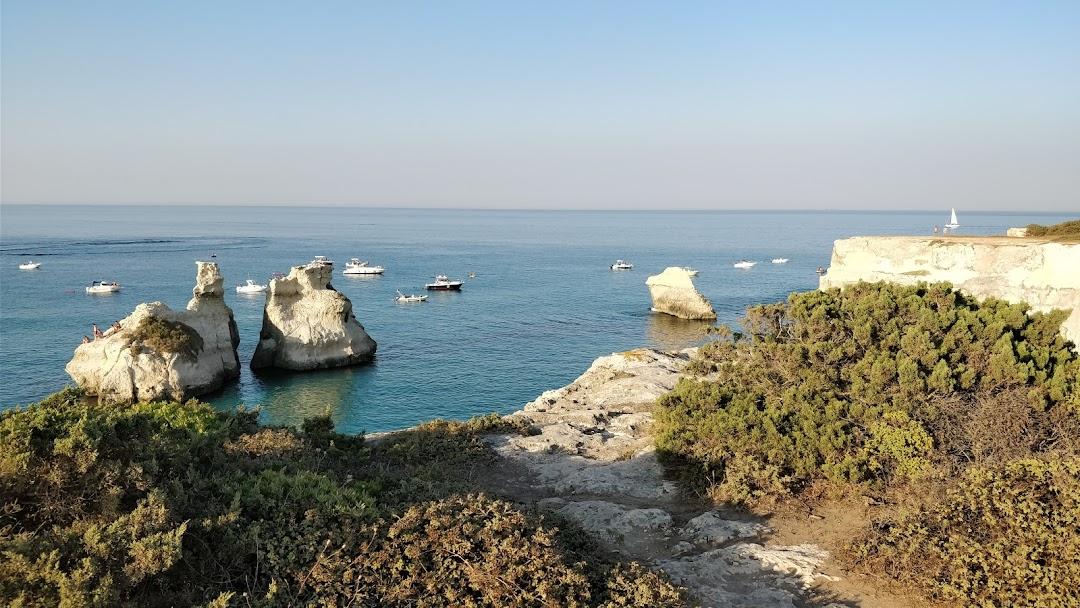 Area Naturale Pineta Costiera Di Torre DellOrso