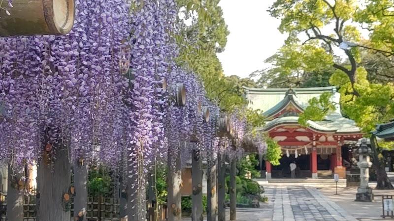 久伊豆神社の藤