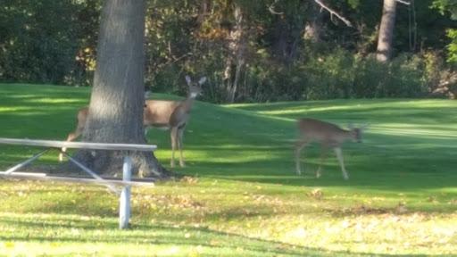 Public Golf Course «Willow Metropark Golf Course», reviews and photos, 22900 Huron River Dr, New Boston, MI 48164, USA