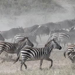 UBON SAFARI LIMITED