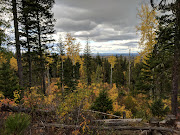 Business Reviews Aggregator: Forests for the World